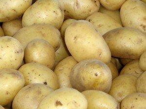 Генетически модифицированный картофель - опасность или польза?