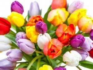 7 советов как продлить жизнь букету из тюльпанов