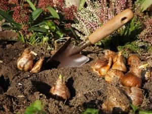 Лучшая идея на красочный сад от przedwiośnia – красивые луковицы, которые высаживают осенью. Конечно, ты не знаешь всех!
