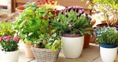 Выбираем оригинальные растения на балкон