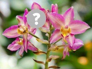 ВАУ! Польские ученые обнаружили новый вид орхидей: выглядит очень... тревожно!