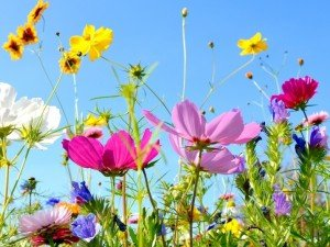 Выберите вместе с нами летние цветы для сада