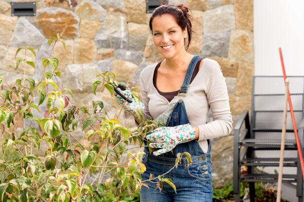 Как защитить цветы от холода?