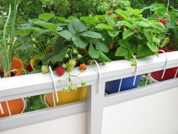 Сад на балконе - что сеять?