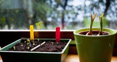 Мода на собственный сад. Начните уже в январе!