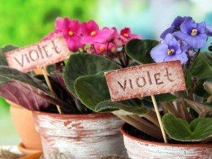 9 комнатных растений для занятых