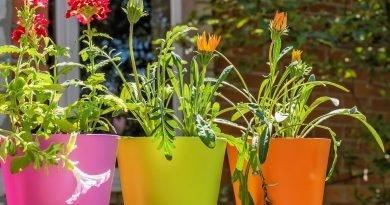 Постарайтесь, чтобы о декоративные цветочные горшки. Будут интересным украшением интерьера или сада
