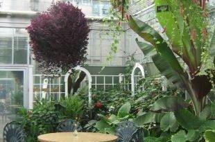 Оранжерея — лето в доме круглый год