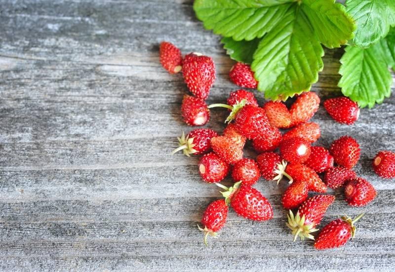 Как вырастить клубники, земляники, ежевики и малины?