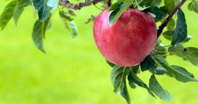 Как сажать и выращивать плодовые деревья?