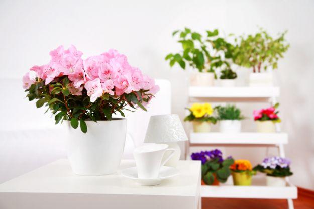 Цветы для занятых