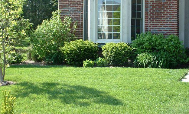 Позаботьтесь о газон весной