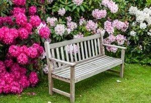 Декоративные кустарники имеют много преимуществ. Выберите наиболее подходящую для вашего сада и посадить еще в этом сезоне!