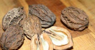 Как расколоть маньчжурский орех
