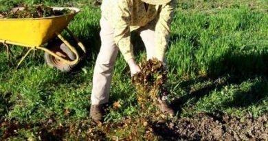 Какие удобрения вносить в почву