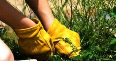 Какую пользу и вред несут минеральные удобрения