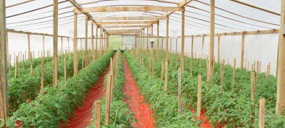 Выращивание овощей в теплице зимой