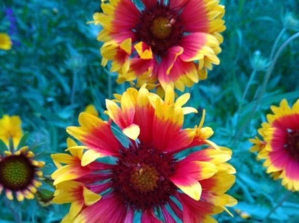 Красивые многолетники для сада: 10 видов и фото