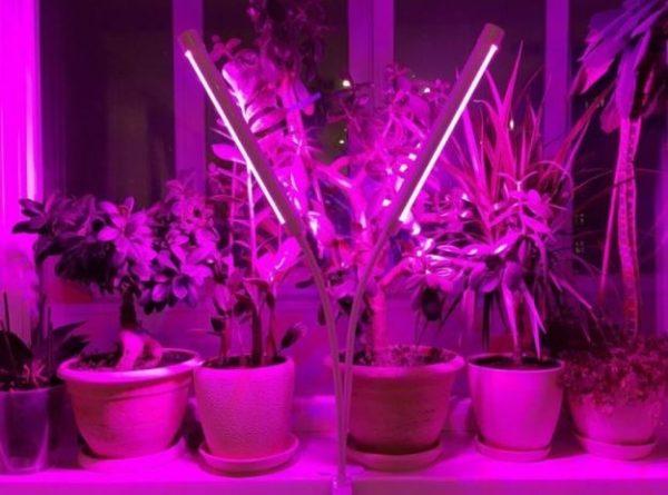 Фитолампы для выращивания рассады и комнатных растений: стоит ли использовать?